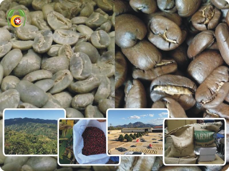 ☘ 莊園混搭風味0814組☘  薩爾瓦多溫泉咖啡豆 混搭 巴西咖啡 1.5磅=1050元•再送半磅(合計2磅=同一口味)